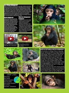 Save The Chimps!