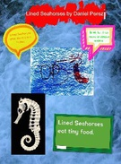 Lined Seahorse's thumbnail