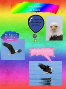 Bald Eagles's thumbnail