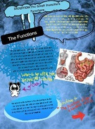 School Biology Project : Digestion IIII' thumbnail