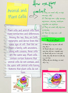 Animal and Plant Cells's thumbnail