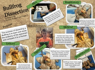 Bullfrog Dissection