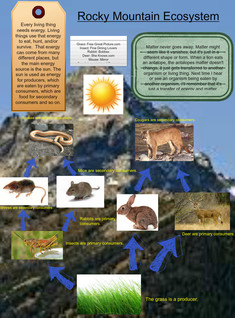 Energy in a Mountain Ecosystem