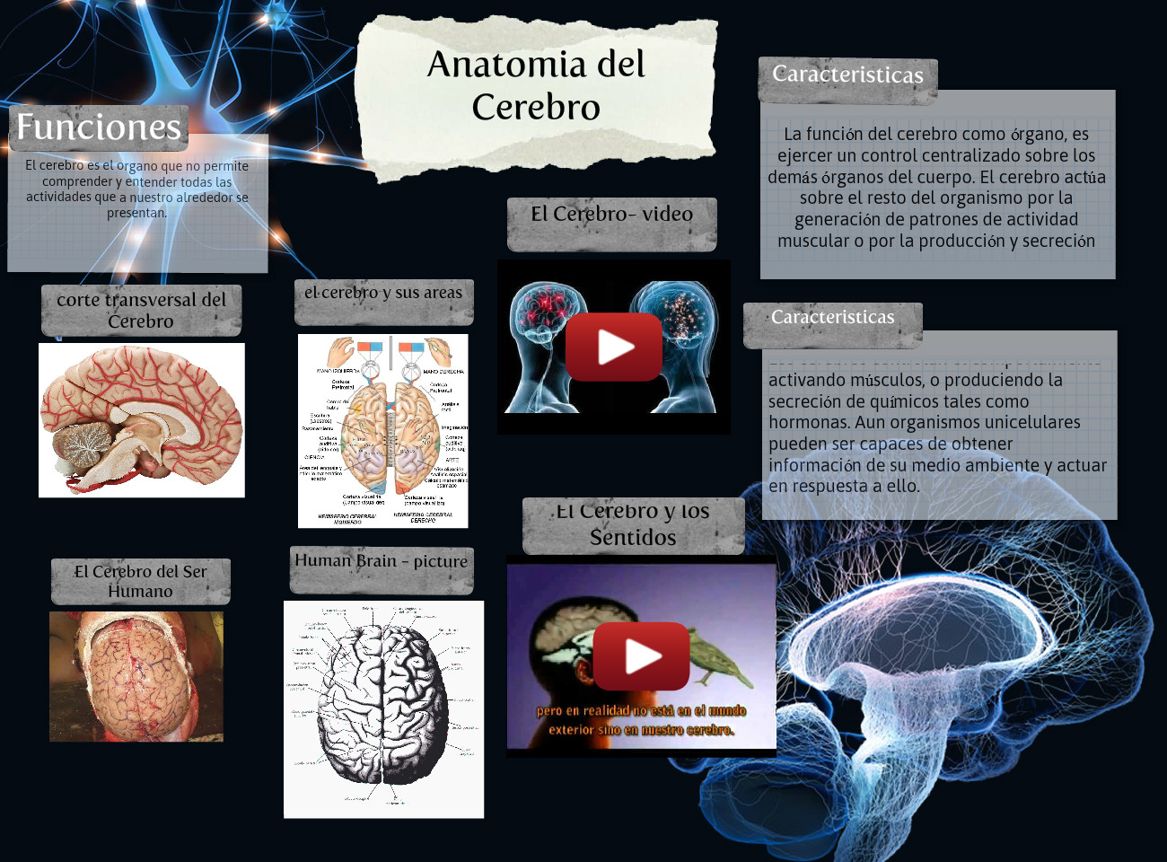 Anatomia del Cerebro: anatomy, brain, head, science | Glogster EDU ...