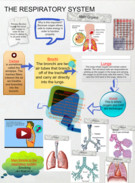Respiratory System's thumbnail