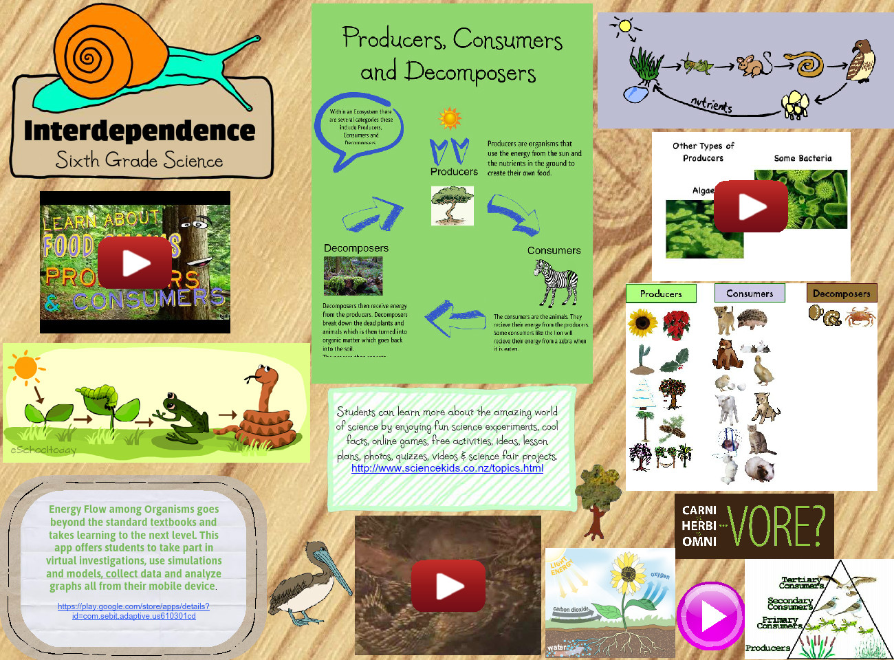 Interdependence: Consumers, Producers, Decomposers