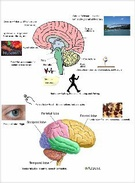 Social Psychology Brain Poster's thumbnail