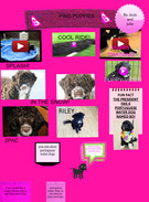 pwd puppies's thumbnail