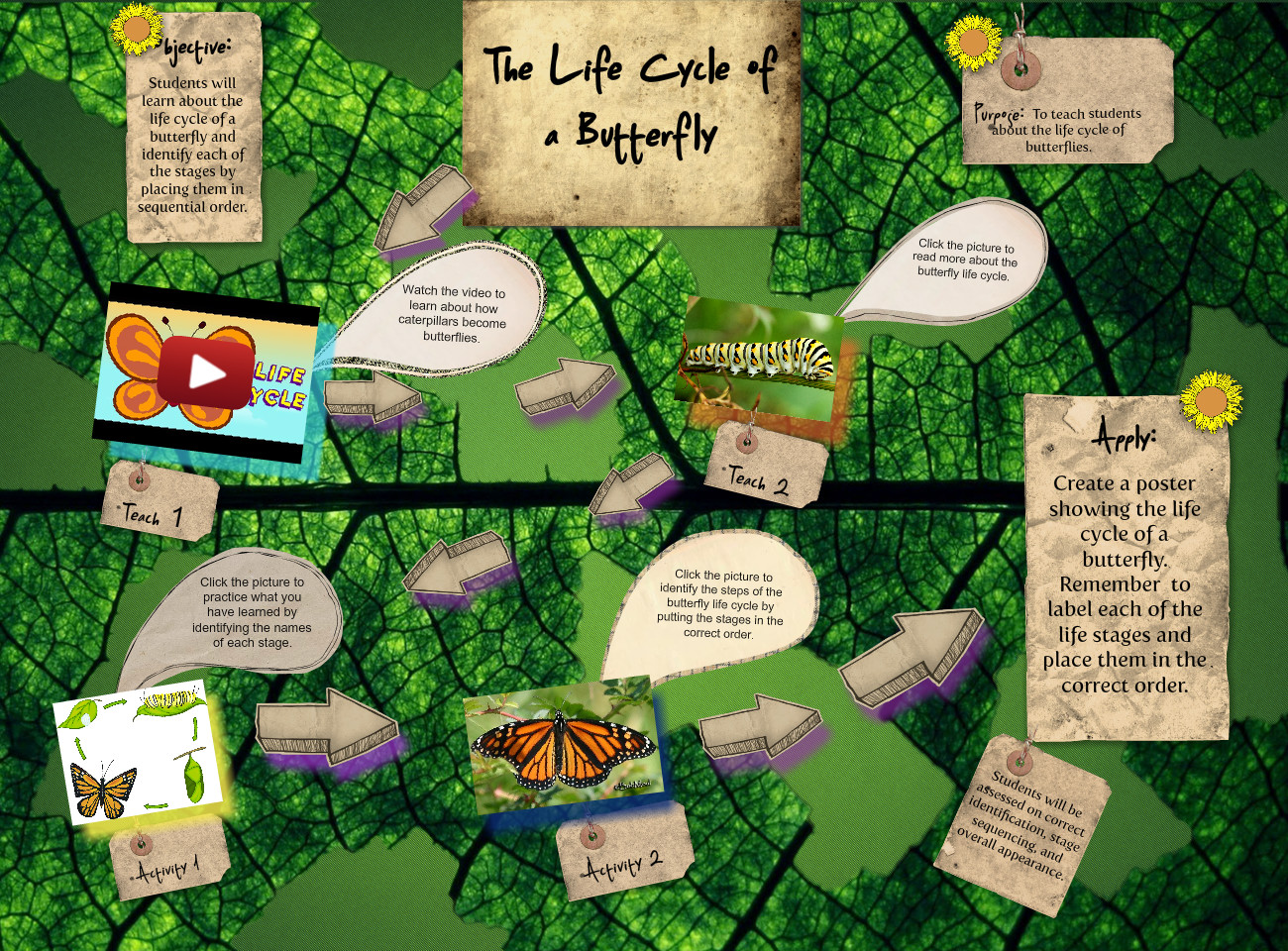 [2015] Megan Polis (Spring 01): Butterfly Life Cycle
