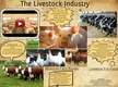 The Livestock Industry thumbnail