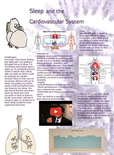 Sleep and the Cardiovascular System