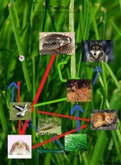 Food Web for Biology's thumbnail