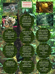 rainforest vocabulary VALERIE STOYER