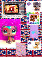 Littlest pet shop RULES's thumbnail