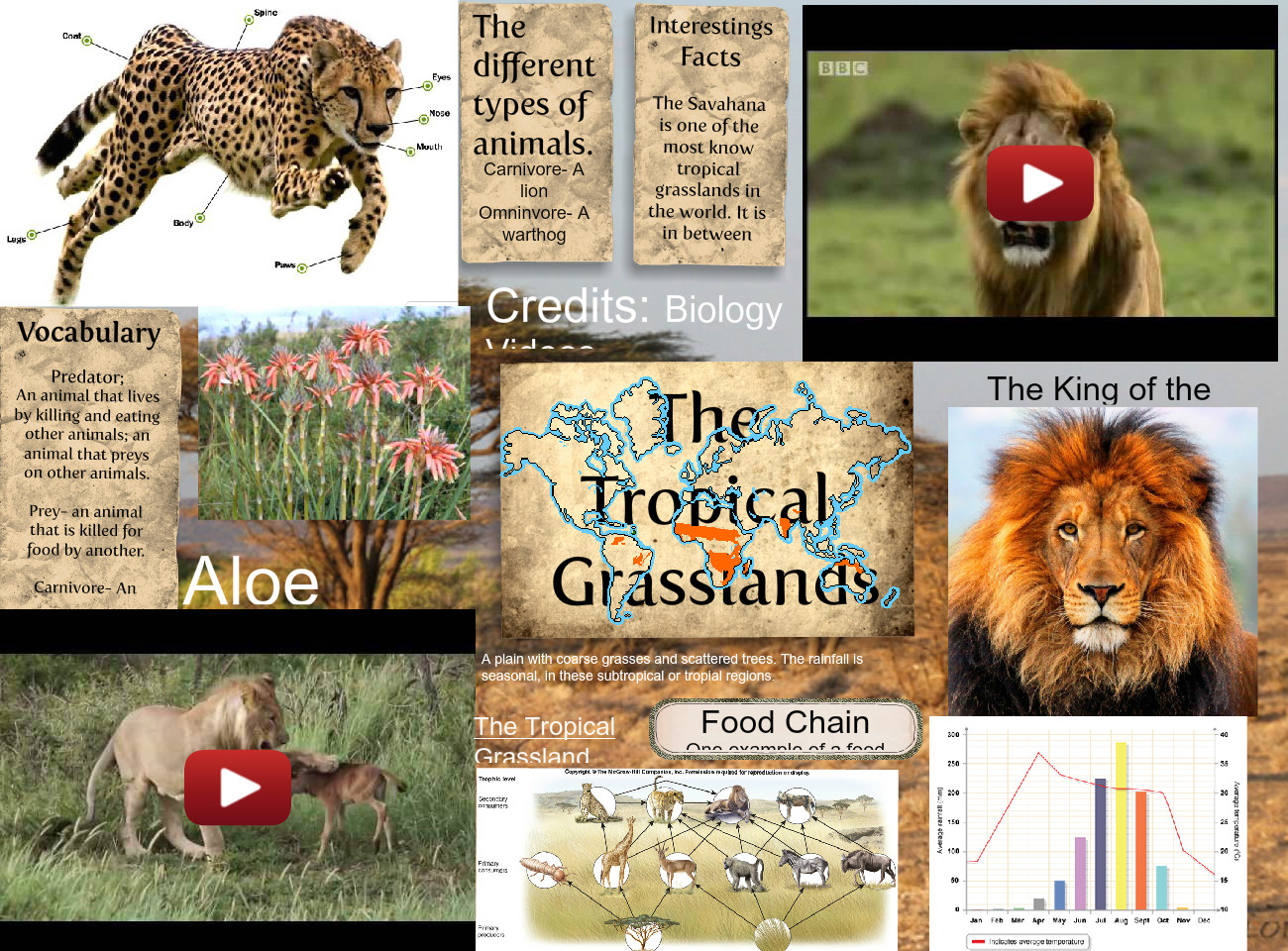 The Tropical Grasslands