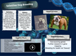 Selective Dog Breeding thumbnail