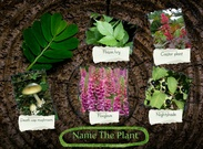 Name the plant tox project's thumbnail